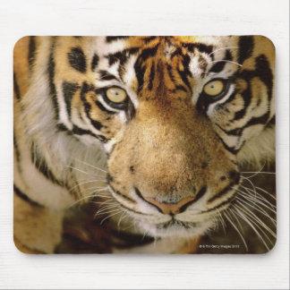 Retrato de un tigre alfombrilla de raton