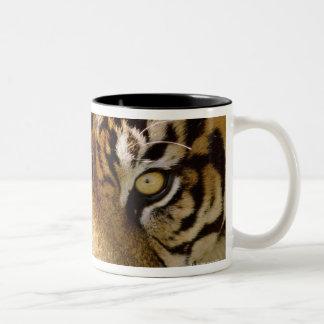Retrato de un tigre taza