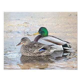Retrato de un varón y de un pato silvestre fotografía