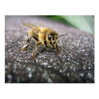 Retrato de una abeja de la miel postal