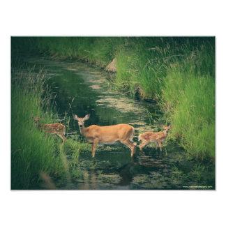 Retrato de una familia de los ciervos fotografía