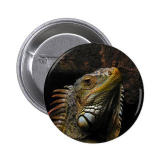 Retrato de una iguana pins