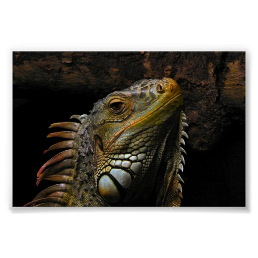 Retrato de una iguana póster