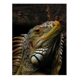 Retrato de una iguana postales