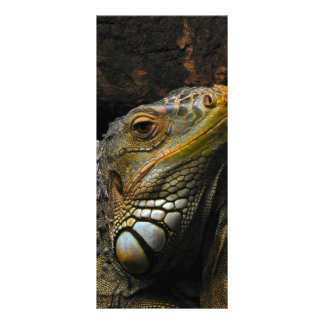 Retrato de una iguana lonas publicitarias