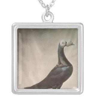 Retrato de una paloma mensajera colgantes personalizados