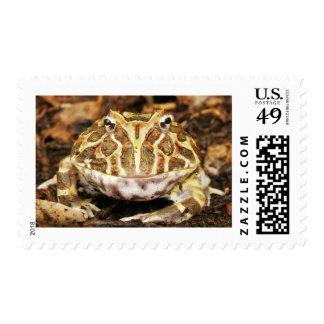 Retrato de una rana de cuernos adornada timbres postales