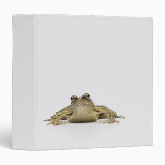 Retrato de una rana en un estudio blanco