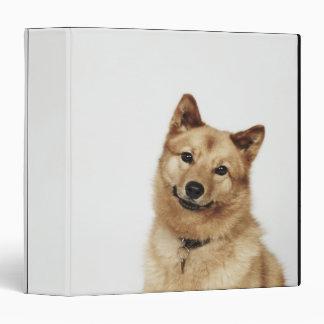 """Retrato de una sonrisa finlandesa del perro del carpeta 1 1/2"""""""