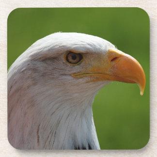 Retrato del águila calva posavasos de bebida