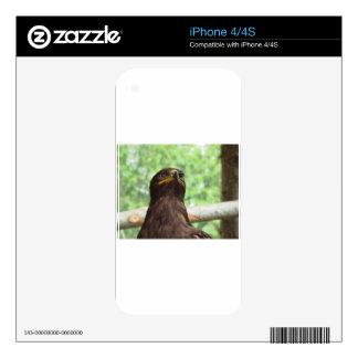 Retrato del águila de la estepa skins para eliPhone 4