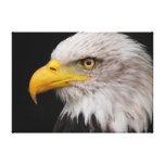 Retrato del águila lona envuelta para galerias