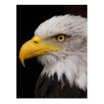 Retrato del águila postal