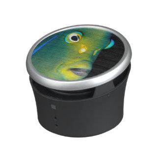 Retrato del Angelfish del semicírculo, bahía de Altavoz Bluetooth