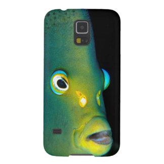 Retrato del Angelfish del semicírculo, bahía de Carcasa Galaxy S5