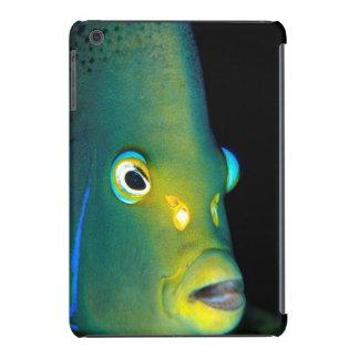 Retrato del Angelfish del semicírculo, bahía de Fundas De iPad Mini Retina