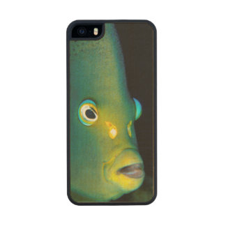 Retrato del Angelfish del semicírculo, bahía de Funda De Arce Carved® Para iPhone 5 Slim