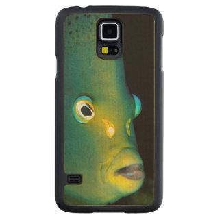 Retrato del Angelfish del semicírculo, bahía de Funda De Galaxy S5 Slim Arce