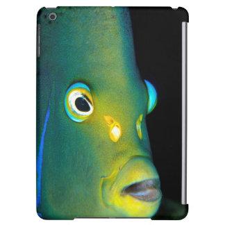 Retrato del Angelfish del semicírculo, bahía de