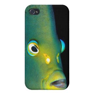 Retrato del Angelfish del semicírculo, bahía de iPhone 4 Cárcasa