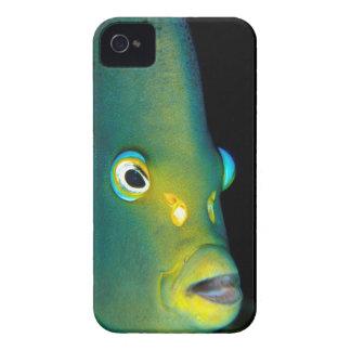 Retrato del Angelfish del semicírculo, bahía de Funda Para iPhone 4