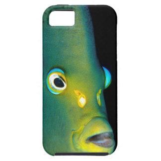 Retrato del Angelfish del semicírculo, bahía de Funda Para iPhone SE/5/5s