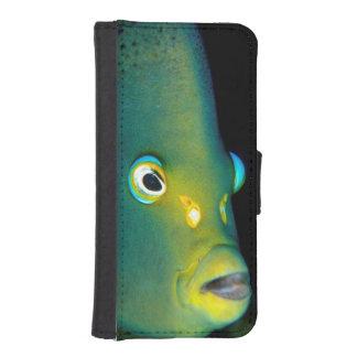 Retrato del Angelfish del semicírculo, bahía de Funda Tipo Billetera Para iPhone 5