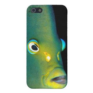 Retrato del Angelfish del semicírculo, bahía de iPhone 5 Fundas
