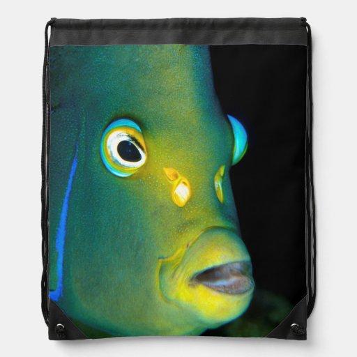 Retrato del Angelfish del semicírculo, bahía de Mochila