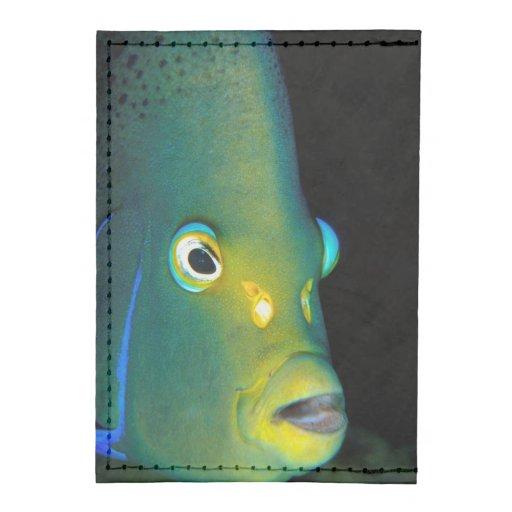 Retrato del Angelfish del semicírculo, bahía de Tarjeteros Tyvek®