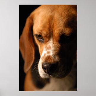 Retrato del beagle póster