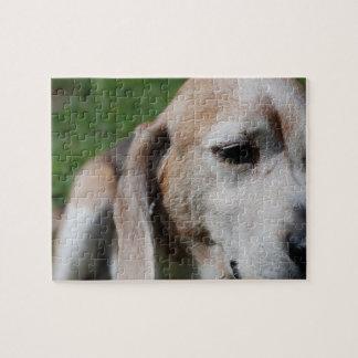 retrato del beagle rompecabezas