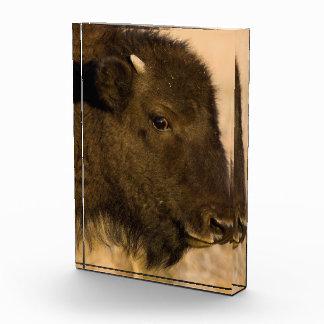Retrato del bebé del bisonte