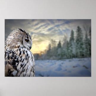 Retrato del búho en fondo del bosque del invierno poster