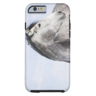 retrato del caballo blanco 2 funda para iPhone 6 tough