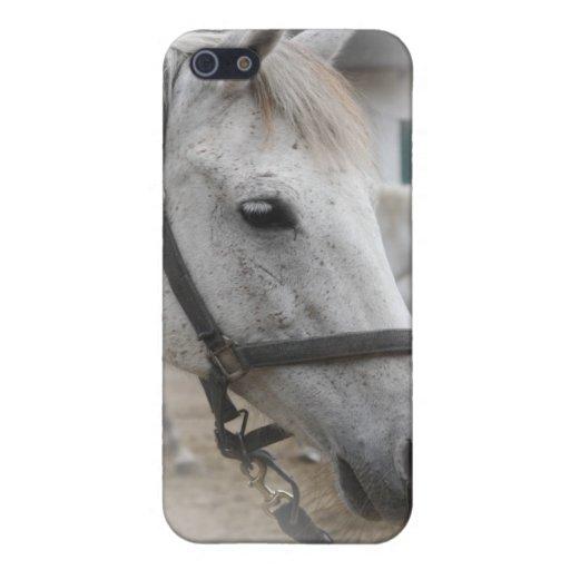 Retrato del caballo blanco iPhone 5 carcasa