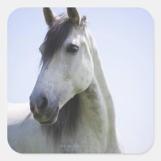 retrato del caballo blanco pegatina cuadrada