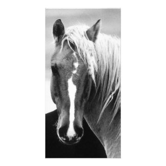 Retrato del caballo de BW Plantilla Para Tarjeta De Foto