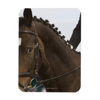retrato del caballo del dressage imanes flexibles
