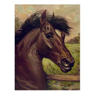 Retrato del caballo del vintage un príncipe Of The Tarjetas Postales