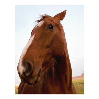 """Retrato del caballo folleto 8.5"""" x 11"""""""