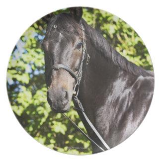 retrato del caballo marrón 2 platos de comidas