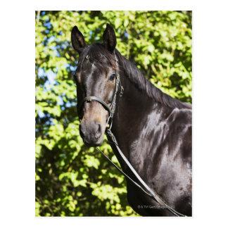 retrato del caballo marrón 2 tarjeta postal