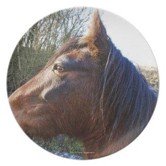 Retrato del caballo marrón en día frío que mira plato para fiesta