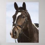 retrato del caballo marrón posters