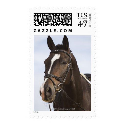 retrato del caballo marrón sellos