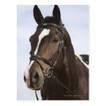 retrato del caballo marrón tarjeta postal