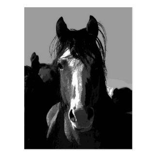Retrato del caballo negro y blanco postal