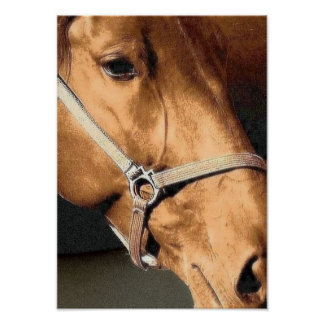 Retrato del caballo póster