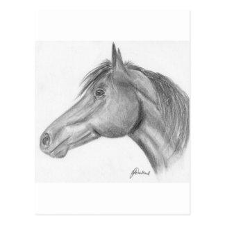Retrato del caballo postales